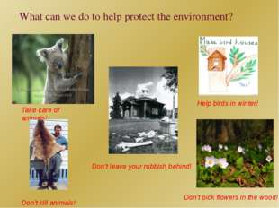 What can we do to help protect the environment? Take care of animals! Don't k