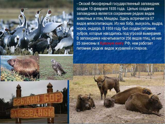 - Окский биосферный государственный заповедник создан 10 февраля 1935 года. Ц...