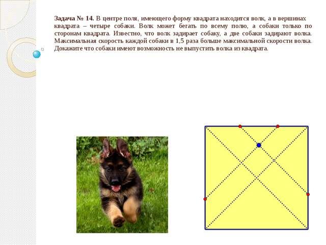 Задача № 14. В центре поля, имеющего форму квадрата находится волк, а в верши...