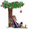 Связано ли открытие Ньютоном теории гравитации с падением яблока?