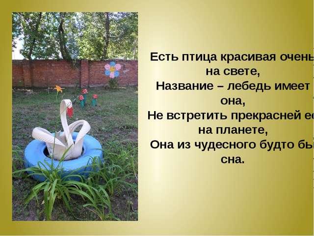 Есть птица красивая очень на свете, Название – лебедь имеет она, Не встретить...