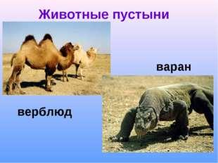 Животные пустыни