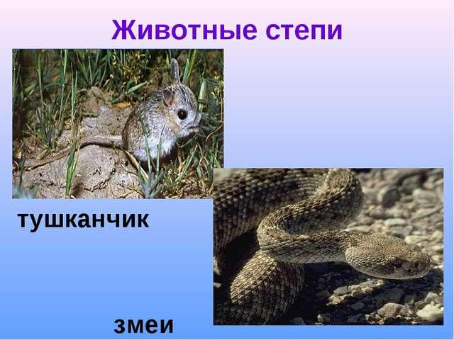 Животные степи