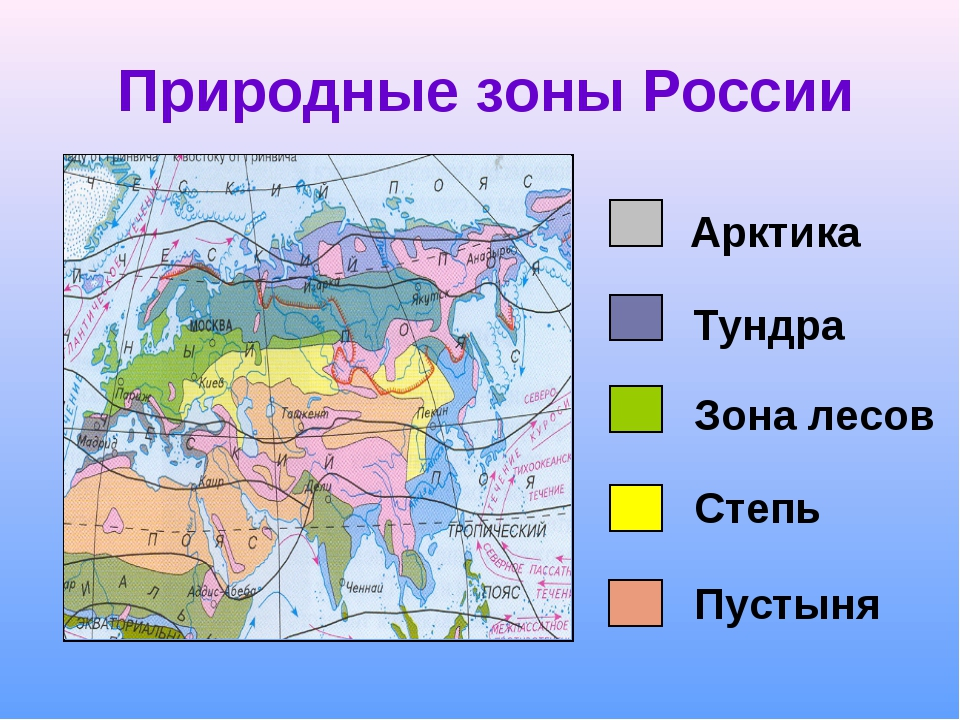 Как сделать план по природной зоны