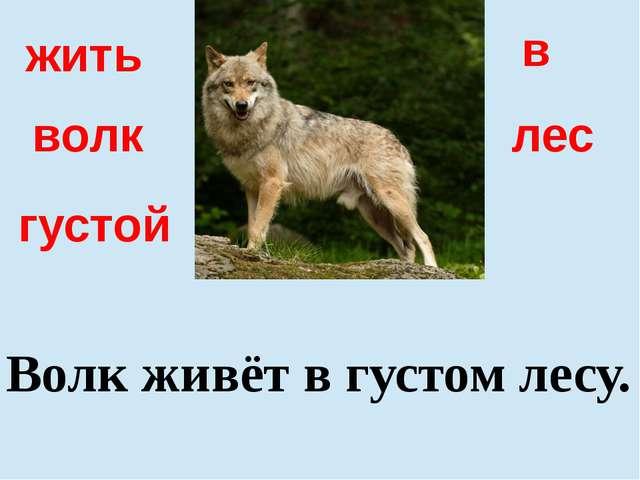 густой в волк Волк живёт в густом лесу. жить лес