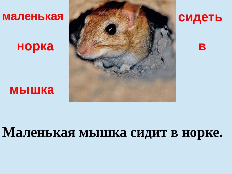 в сидеть маленькая мышка норка Маленькая мышка сидит в норке.