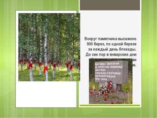Вокруг памятника высажено 900 берез, по одной березе за каждый день блокады.