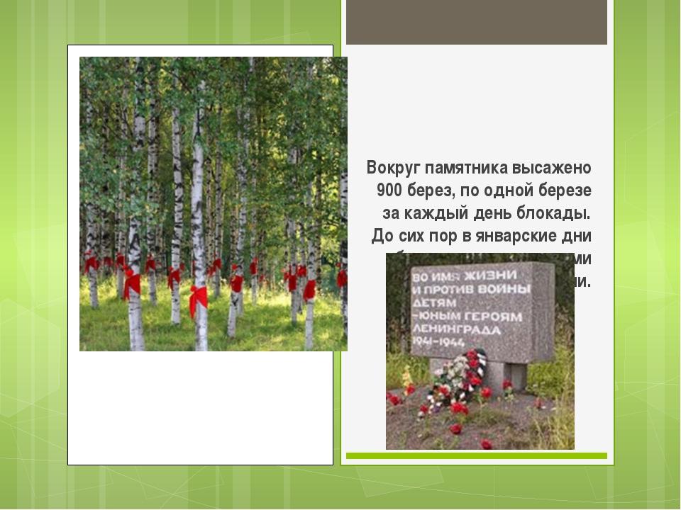Вокруг памятника высажено 900 берез, по одной березе за каждый день блокады....