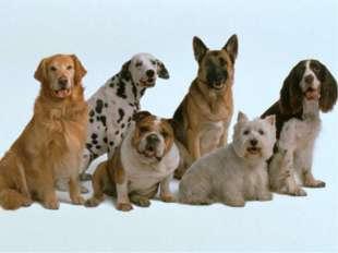 Брата кровного в каждой собаке