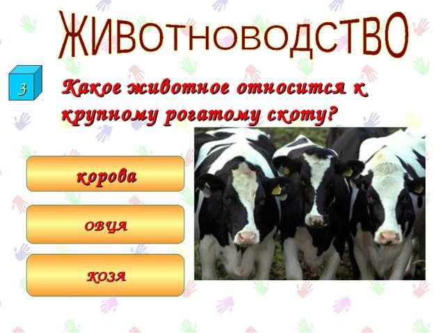 Какое животное относится к крупному рогатому скоту? корова ОВЦА КОЗА 3
