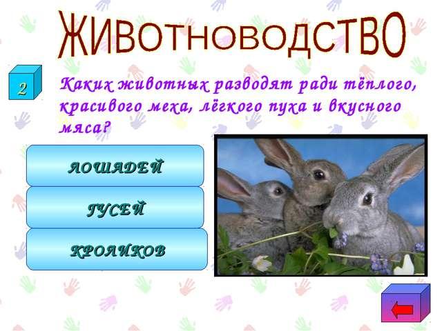 Каких животных разводят ради тёплого, красивого меха, лёгкого пуха и вкусног...