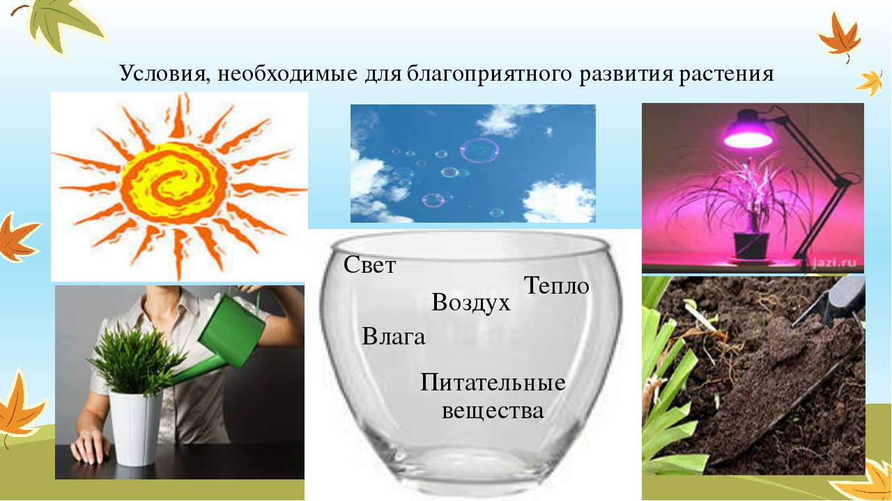 Условия, необходимые для благоприятного развития растения Тепло Воздух Влага...