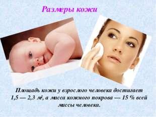 Размеры кожи Площадь кожи у взрослого человека достигает 1,5— 2,3 м², а масс