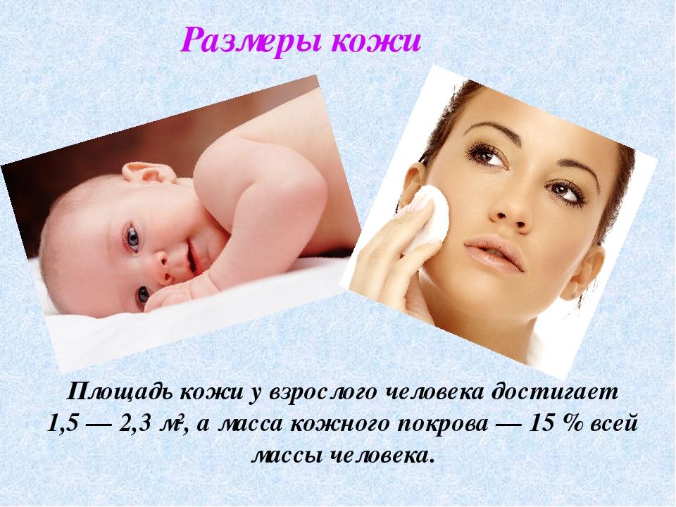 Размеры кожи Площадь кожи у взрослого человека достигает 1,5— 2,3 м², а масс...