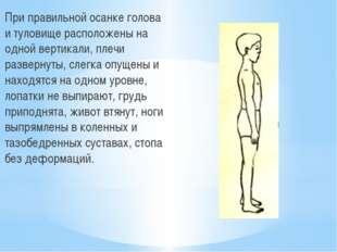 При правильной осанке голова и туловище расположены на одной вертикали, плеч