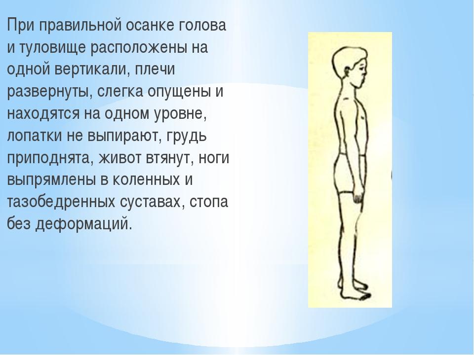 При правильной осанке голова и туловище расположены на одной вертикали, плеч...