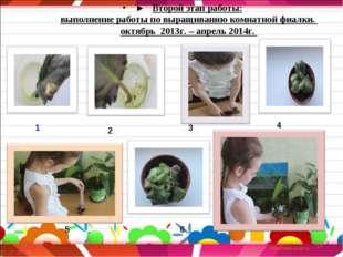 ► Второй этап работы: выполнение работы по выращиванию комнатной фиалки. окт