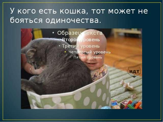 У кого есть кошка, тот может не бояться одиночества.