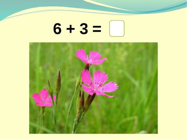 6 + 3 = 9