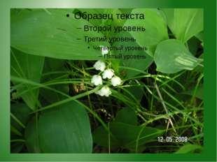 Его латинское название «лилия долин, цветущая в мае». При внешней красоте рас