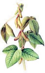http://wsyachina.narod.ru/biology/genetic_modify/4.jpg