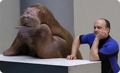 walrus-02.jpg