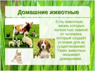 Домашние животные Есть животные, жизнь которых полностью зависит от человека,