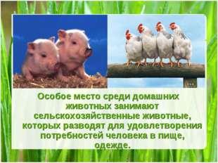 Особое место среди домашних животных занимают сельскохозяйственные животные,