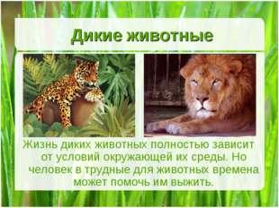 Дикие животные Жизнь диких животных полностью зависит от условий окружающей и