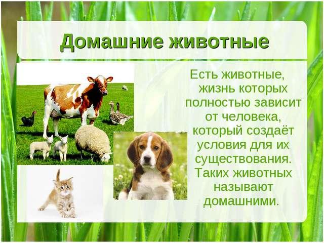 Домашние животные Есть животные, жизнь которых полностью зависит от человека,...