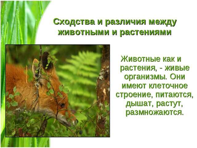 Сходства и различия между животными и растениями Животные как и растения, - ж...