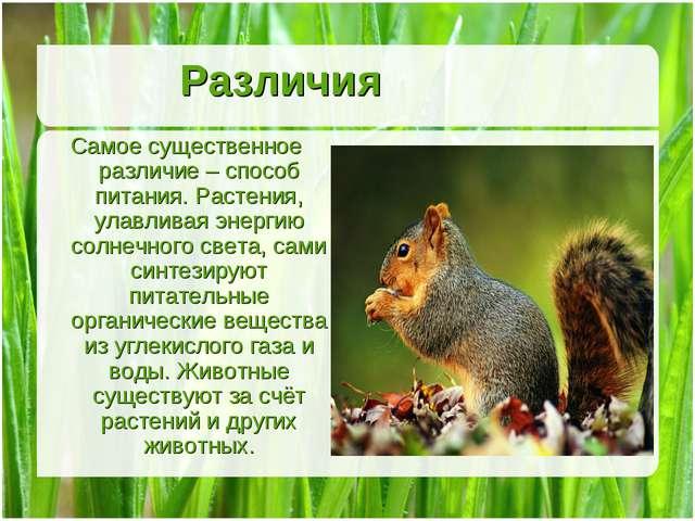 Различия Самое существенное различие – способ питания. Растения, улавливая эн...