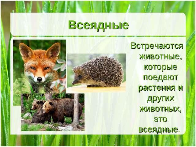 Всеядные Встречаются животные, которые поедают растения и других животных, эт...