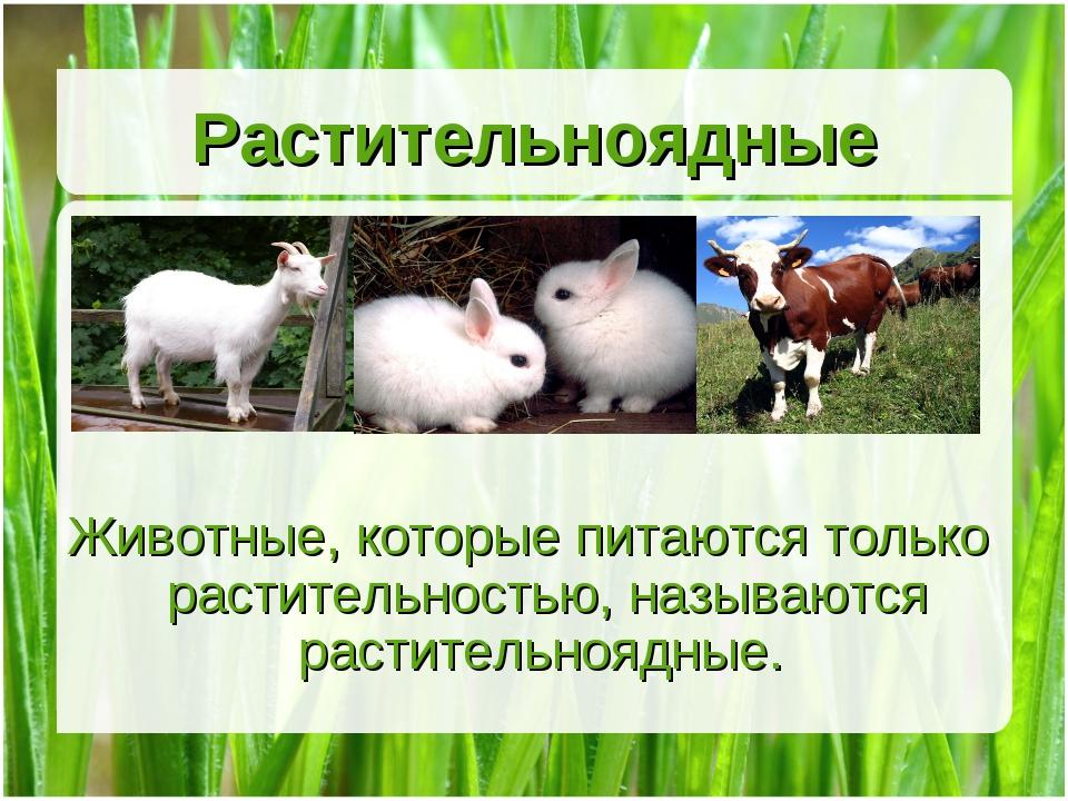 Растительноядные Животные, которые питаются только растительностью, называютс...