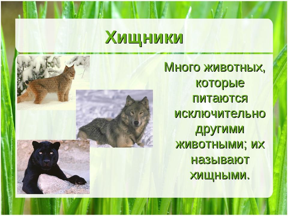 Хищники Много животных, которые питаются исключительно другими животными; их...