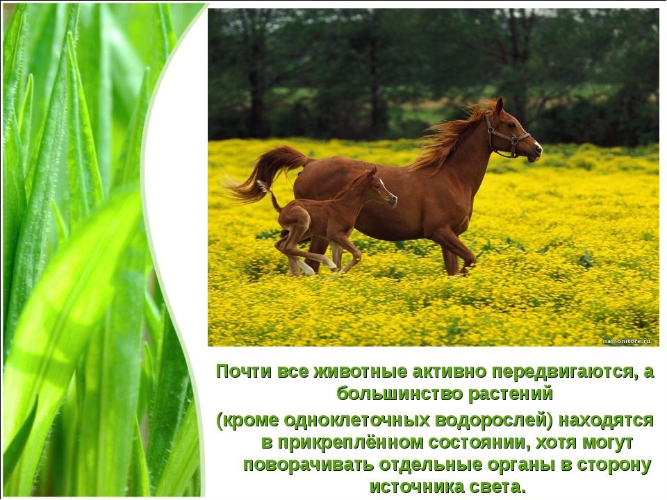 Почти все животные активно передвигаются, а большинство растений (кроме однок...