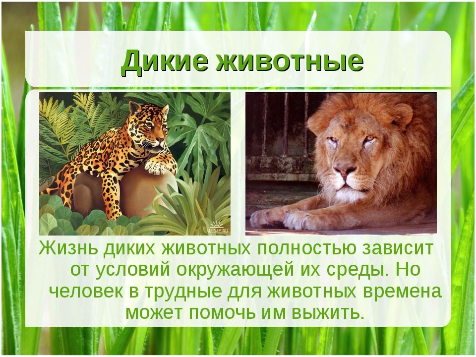 Дикие животные Жизнь диких животных полностью зависит от условий окружающей и...