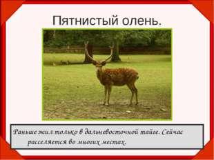Пятнистый олень. Раньше жил только в дальневосточной тайге. Сейчас расселяетс