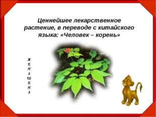 Ценнейшее лекарственное растение, в переводе с китайского языка: «Человек – к