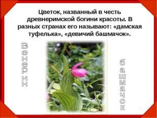 Цветок, названный в честь древнеримской богини красоты. В разных странах его