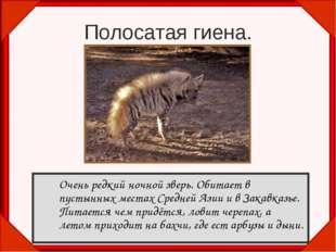 Очень редкий ночной зверь. Обитает в пустынных местах Средней Азии и в Закав