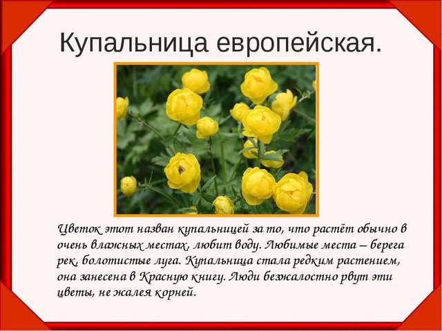 Купальница европейская. Цветок этот назван купальницей за то, что растёт обы...