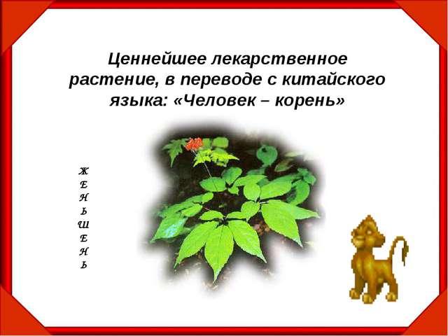 Ценнейшее лекарственное растение, в переводе с китайского языка: «Человек – к...