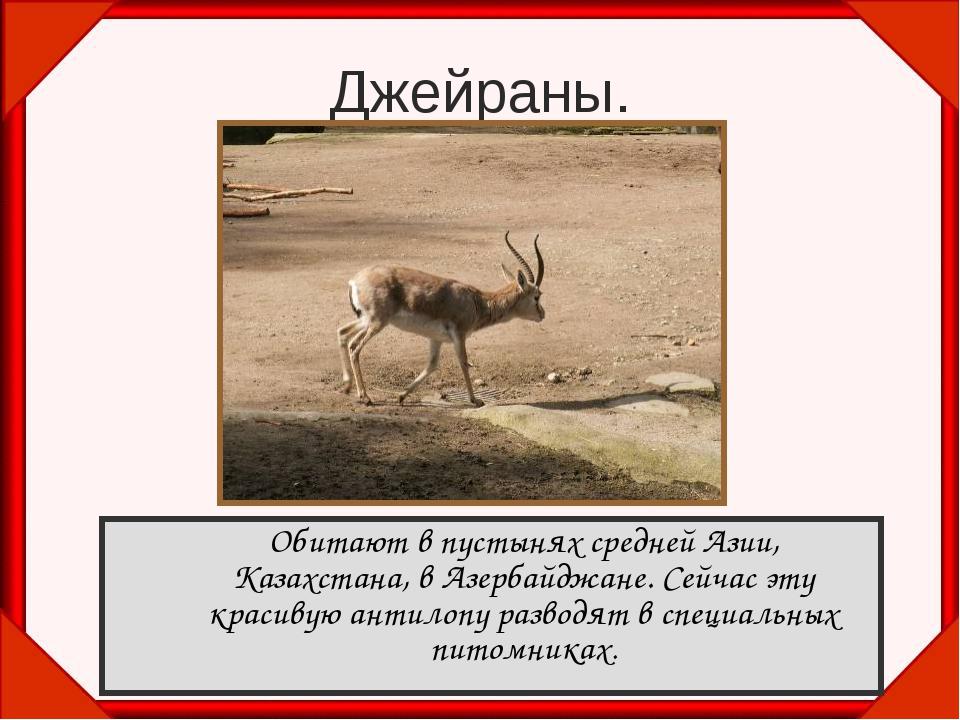 Джейраны. Обитают в пустынях средней Азии, Казахстана, в Азербайджане. Сейча...