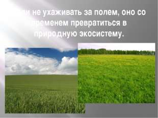 Если не ухаживать за полем, оно со временем превратиться в природную экосисте