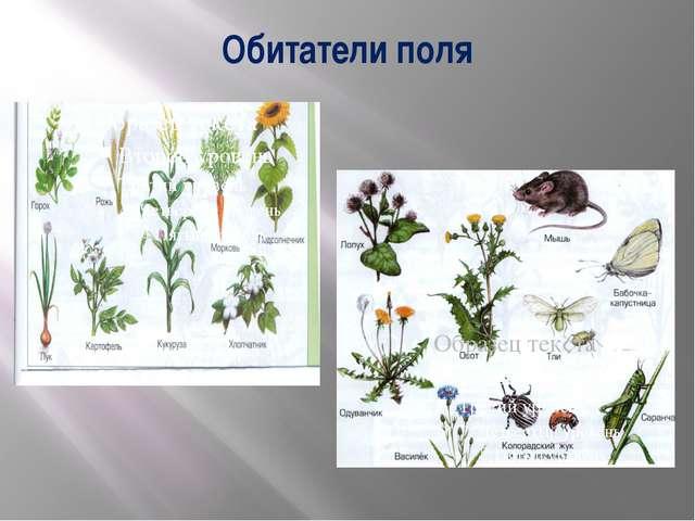 Обитатели поля