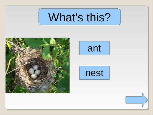 What's this? ant nest
