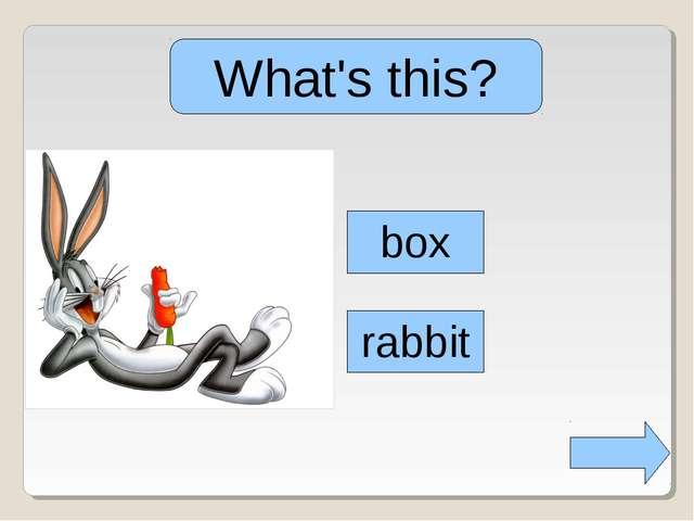 What's this? box rabbit