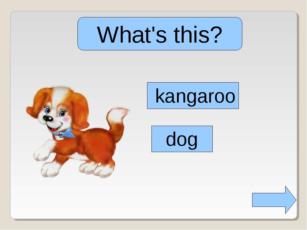 What's this? kangaroo dog