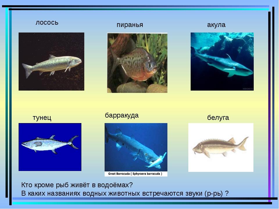 лосось пиранья акула тунец барракуда белуга Кто кроме рыб живёт в водоёмах?...